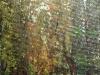 Alee in gradina botanica - ulei pe panza, 60x30 cm