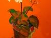 Floare în ghiveci (30/40 tempera pe carton)