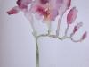 Parfumul (acuarela)