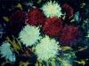 crizanteme-ulei-carton-55x75