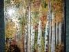 Padurea de mesteceni / 50 x 40 cm / tehnica mixta, pictura pe panza /2013;